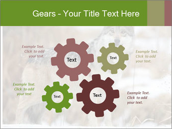 Mexican gray wolf PowerPoint Template - Slide 47