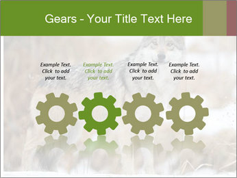 Mexican gray wolf PowerPoint Template - Slide 48