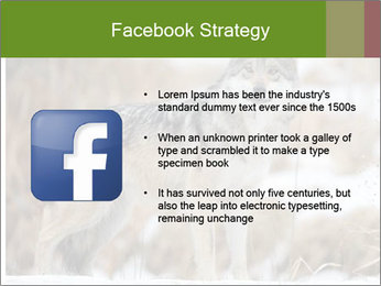 Mexican gray wolf PowerPoint Template - Slide 6