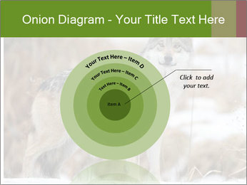 Mexican gray wolf PowerPoint Template - Slide 61