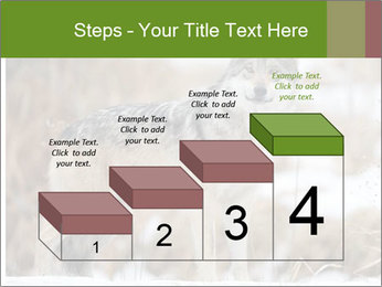Mexican gray wolf PowerPoint Template - Slide 64