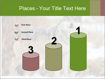 Mexican gray wolf PowerPoint Template - Slide 65