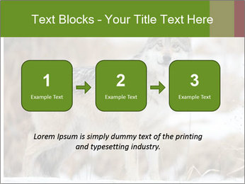 Mexican gray wolf PowerPoint Template - Slide 71