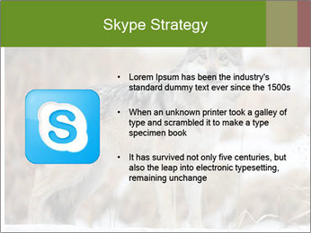 Mexican gray wolf PowerPoint Template - Slide 8