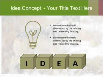 Mexican gray wolf PowerPoint Template - Slide 80