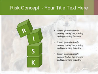 Mexican gray wolf PowerPoint Template - Slide 81