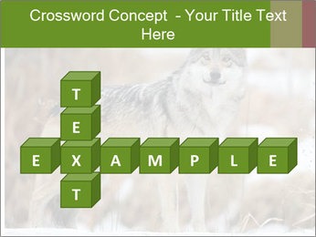 Mexican gray wolf PowerPoint Template - Slide 82