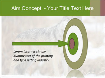 Mexican gray wolf PowerPoint Template - Slide 83
