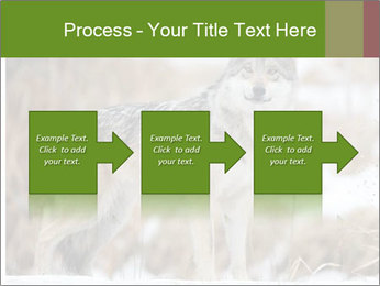 Mexican gray wolf PowerPoint Template - Slide 88
