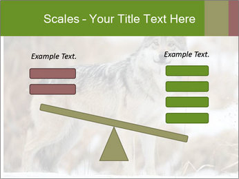 Mexican gray wolf PowerPoint Template - Slide 89