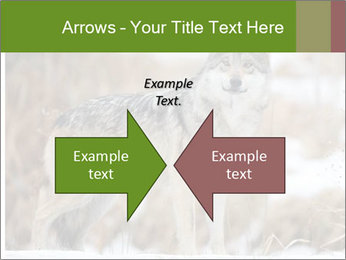 Mexican gray wolf PowerPoint Template - Slide 90