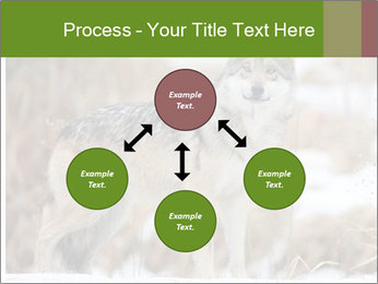Mexican gray wolf PowerPoint Template - Slide 91