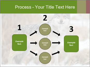 Mexican gray wolf PowerPoint Template - Slide 92