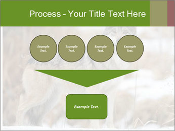 Mexican gray wolf PowerPoint Template - Slide 93