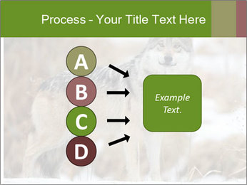 Mexican gray wolf PowerPoint Template - Slide 94