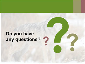 Mexican gray wolf PowerPoint Template - Slide 96