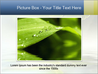 Green leaf reflecting in river water PowerPoint Template - Slide 16