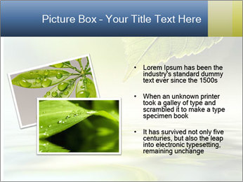 Green leaf reflecting in river water PowerPoint Template - Slide 20