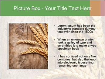 Wheat Ears PowerPoint Templates - Slide 13