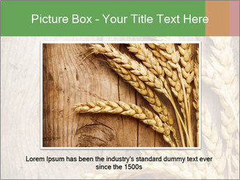 Wheat Ears PowerPoint Templates - Slide 15