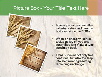 Wheat Ears PowerPoint Templates - Slide 17