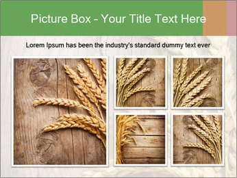 Wheat Ears PowerPoint Templates - Slide 19