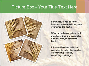 Wheat Ears PowerPoint Templates - Slide 23