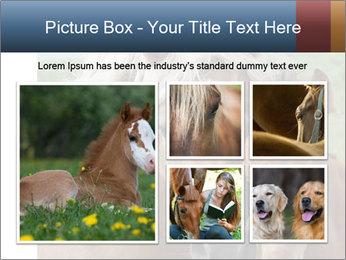 Dutch landscape PowerPoint Templates - Slide 19
