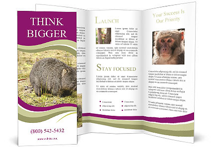 0000087916 Brochure Template