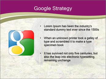 Wombat in Cradle PowerPoint Templates - Slide 10