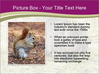 Wombat in Cradle PowerPoint Templates - Slide 13