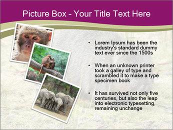 Wombat in Cradle PowerPoint Templates - Slide 17