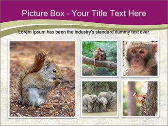 Wombat in Cradle PowerPoint Templates - Slide 19