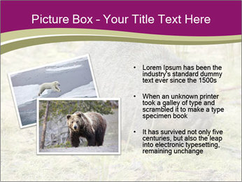 Wombat in Cradle PowerPoint Templates - Slide 20