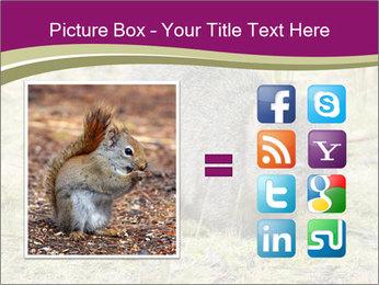 Wombat in Cradle PowerPoint Templates - Slide 21