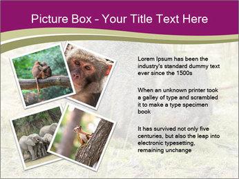 Wombat in Cradle PowerPoint Templates - Slide 23