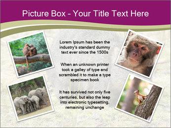 Wombat in Cradle PowerPoint Templates - Slide 24