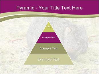 Wombat in Cradle PowerPoint Templates - Slide 30