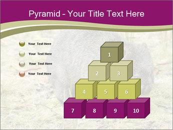 Wombat in Cradle PowerPoint Templates - Slide 31