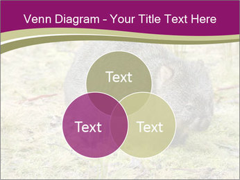 Wombat in Cradle PowerPoint Templates - Slide 33