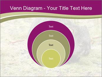 Wombat in Cradle PowerPoint Templates - Slide 34