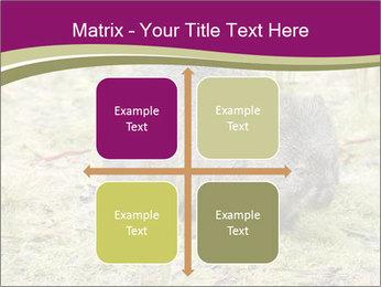 Wombat in Cradle PowerPoint Templates - Slide 37
