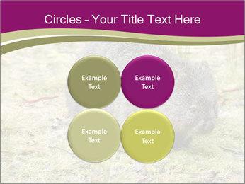 Wombat in Cradle PowerPoint Templates - Slide 38