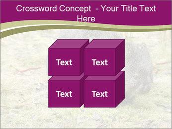 Wombat in Cradle PowerPoint Templates - Slide 39