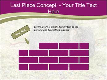 Wombat in Cradle PowerPoint Templates - Slide 46