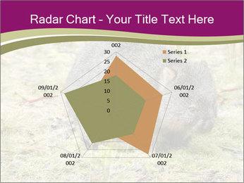 Wombat in Cradle PowerPoint Templates - Slide 51