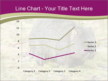 Wombat in Cradle PowerPoint Templates - Slide 54