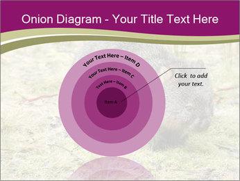 Wombat in Cradle PowerPoint Templates - Slide 61