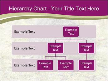 Wombat in Cradle PowerPoint Templates - Slide 67