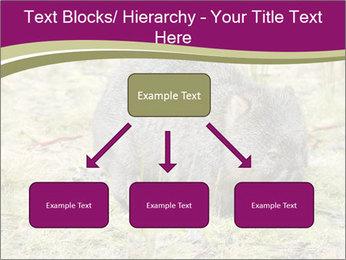 Wombat in Cradle PowerPoint Templates - Slide 69